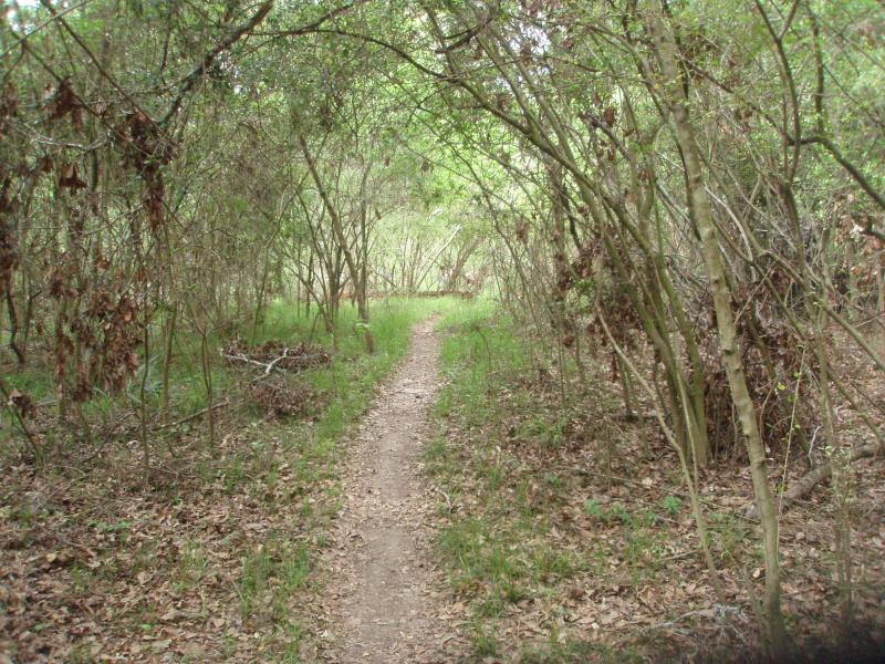 Mountainbiketx Com Trails Gulf Coast Collins Park