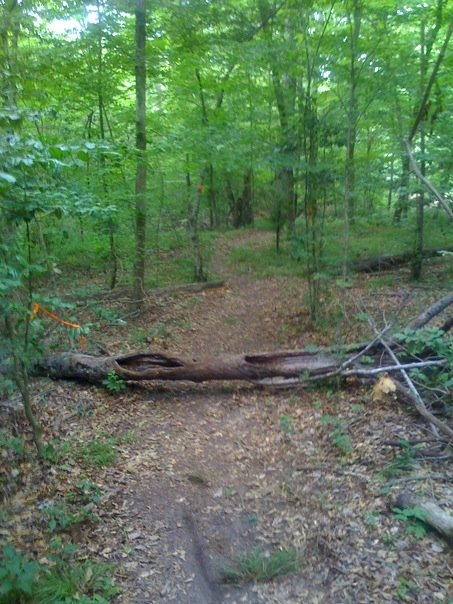 Mountainbiketx Com Trails Piney Woods Faulkner Park